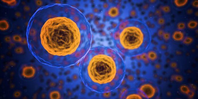conservare le cellule staminali